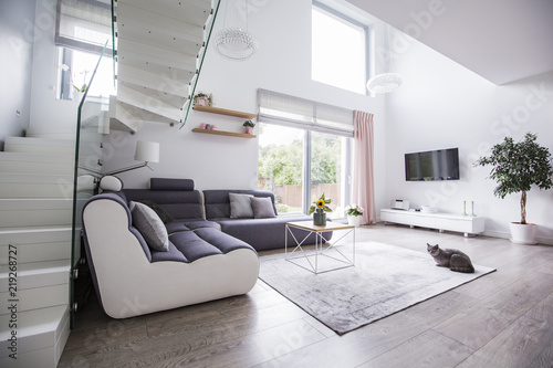 Cat in a modern living room interior with a corner sofa, stairs, tv and balcony window. Real photo
