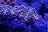 abstract underwater world of corals and microorganisms closeup - 219277132