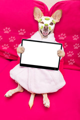 wellness beauty mask  spa  dog © Javier brosch