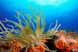anemone - 219331786