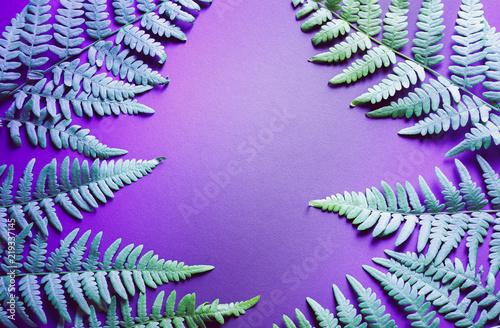 Fern leaves. Beautiful ultra violet background.