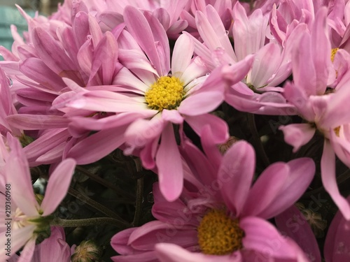 pink flowers - 219360968