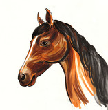 Brown horse with a black mane - 219367561