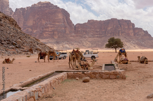 Camels rest at Lawrence of Arabia spring. Wadi Rum desert, Jordan © arkady_z