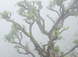 Closeup of a twisted tree in the fog - 219383191