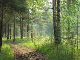 forest_sun_er