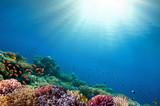 Underwater coral reef background - 219395798