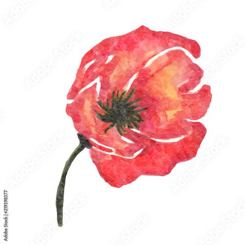 Fototapeta watercolor poppy flower isolated on white background