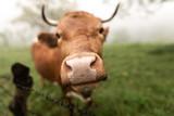 proper animal husbandry and organic food, vegetarians - 219409151