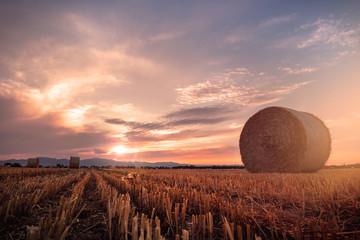 Coucher de soleil en plaine d'alsace sur les moissons concept agriculture