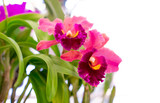 Selective focus of beautiful purple orchid on white background