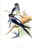 Illustration of bird - 219443921