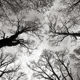 Kraft der Bäume