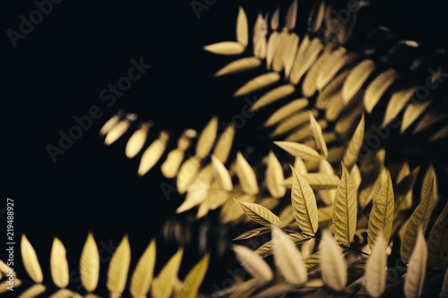 Leaves in the night