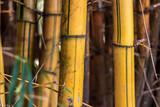 Bamboo close-up Garças Park