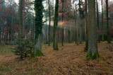 Panoramic view of autumn forest, beautiful autumn 6