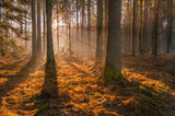 Autumn forest, sunshine under the trees, morning 1