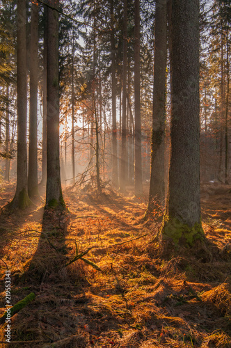Autumn forest, sunshine under the trees, morning 2