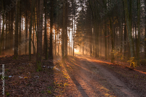 Autumn forest, sunshine under the trees, morning
