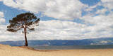 Lonely tree on bay, view of alone pine tree on shore of lake Baikal, Russia.