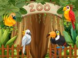Bird in the zoo - 219635537