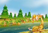 Wild animals living next to river - 219635766