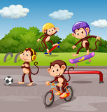 Monkey playing at playground - 219635906