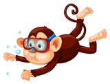A monkey diving on white background - 219637508