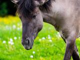 Wildpferd - 219658706