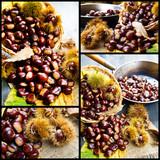 collage of chestnut photos - 219661192