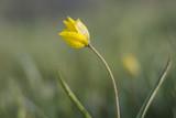 The rare plant