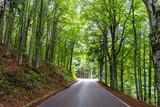 Moderna strada di montagna all'interno di un bosco verde 4