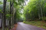 Moderna strada di montagna all'interno di un bosco verde 3