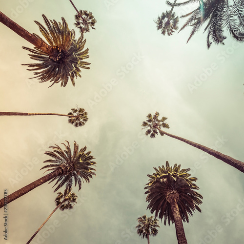Palm trees, low angle shot. Vintage tone. Los angeles, Beverly Hills