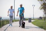 Full length portrait of active senior couple enjoying morning run with pet dog on park, copy space - 219728586