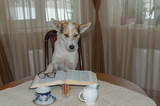 Portrait of smart white mixed-breed dog reading big book while sitting on a chair at the table - 219742758