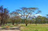 Savannah landscape in the National park of Kenya - 219745938