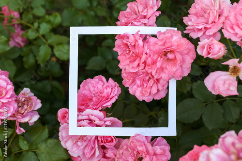 Creative and nature concept. Flowers of pink rose with paper card frame for text. - 219746992