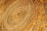 fantastic round pattern on the surface of wood natural natural pattern close-up