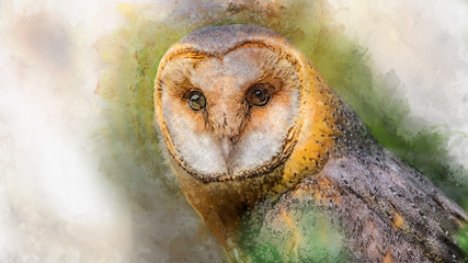 Watercolor owl isolated on white background. Hand drawn watercolor owl perfect for design greating card or print
