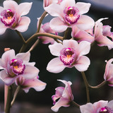 Beautiful violet flowers on a branch. Flowering orchids. Сlose up