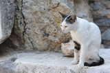 A cute white cat siiting on the rocks during summer in Turkey - 219771543