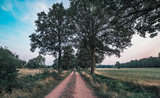 Dirt road with trees in rural area at sunset. - 219779746