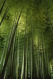 Bamboo grove, bamboo forest at Arashiyama, Kyoto, Japan - 219779790