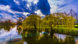 Colourful willow, reaching to the water  - 219782900