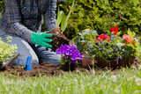 Planting flowers in the garden home - 219789333