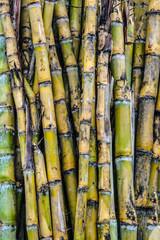 Sugar cane line. © apple2499
