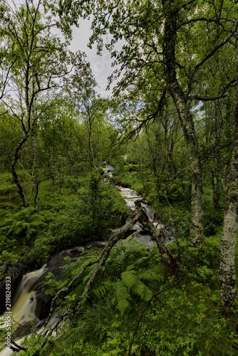 Norway Nature - 219824933