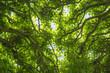 Leaf ceiling