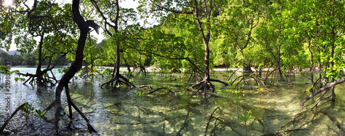 Panorama of a Mangrove forest on Mu Ko Surin Island in Thailand - 219857337